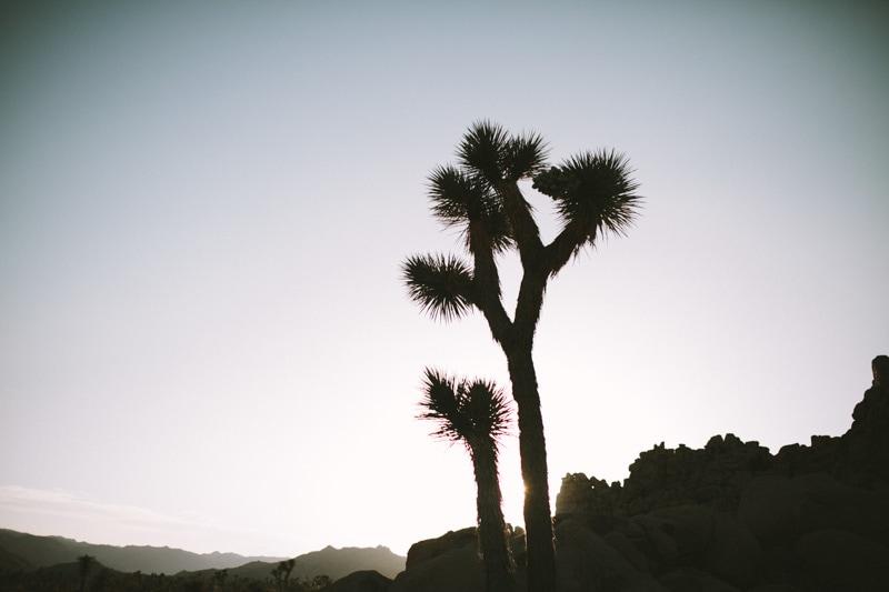 shadow of yucca tree in joshua Tree