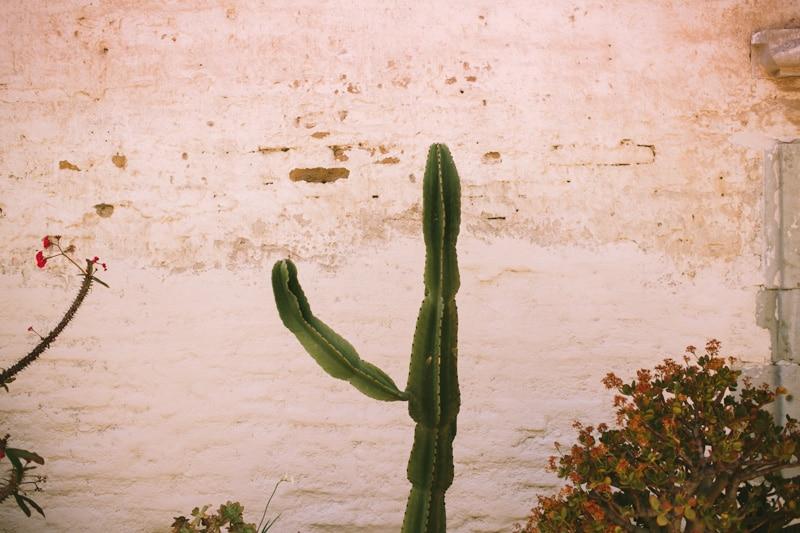 cactus in san juan capistrano mission