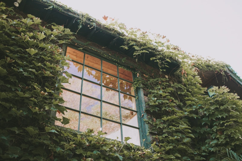 green ivy on house