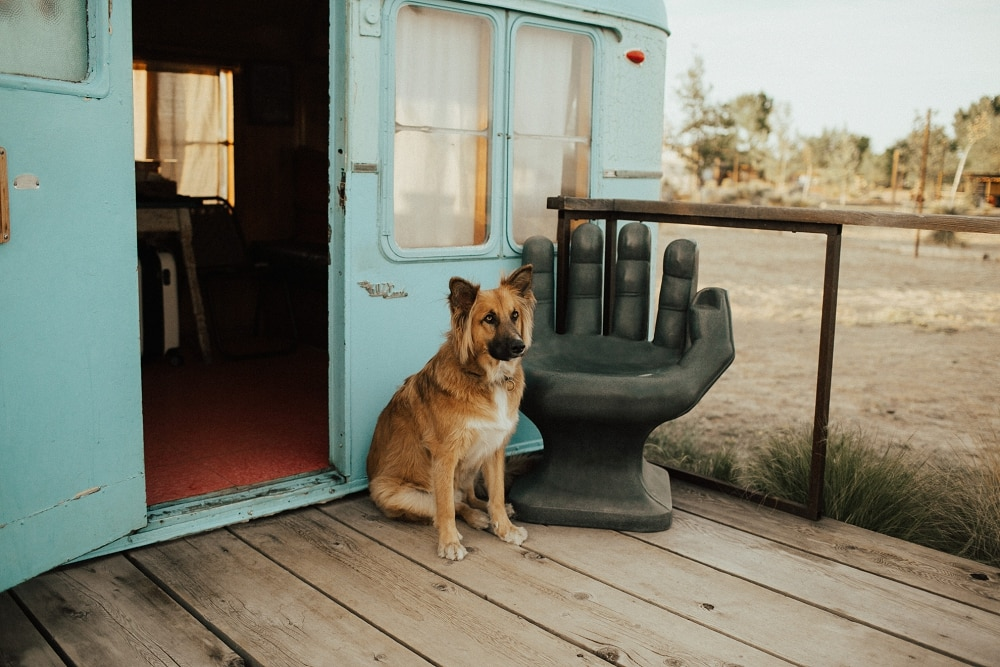 el cosmico allows dogs