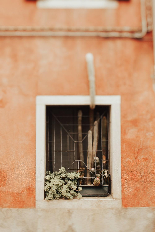 cactus in murano