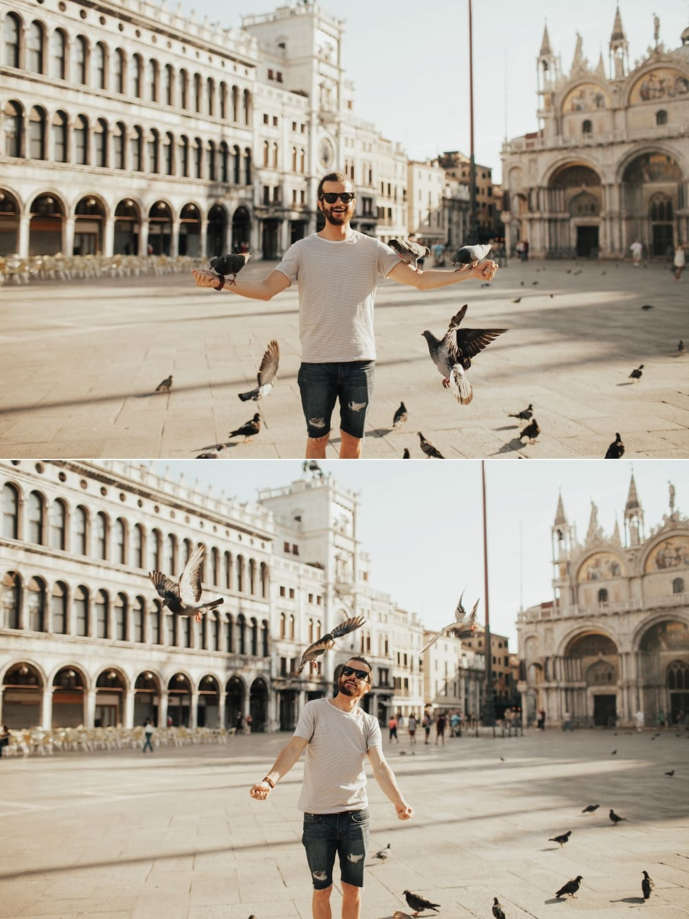 pigeons at st mark's square