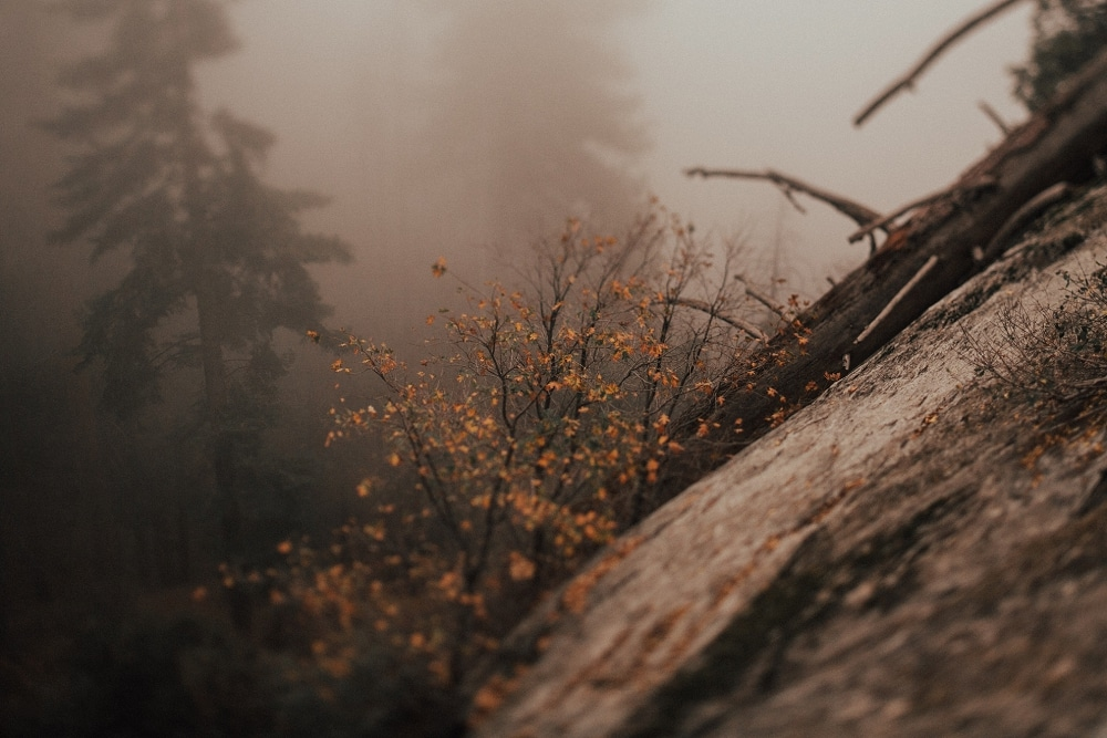 foggy moro rock trail