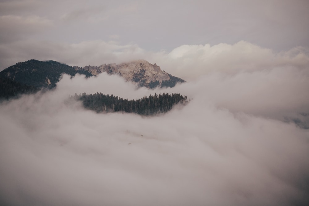 fog at moro rock