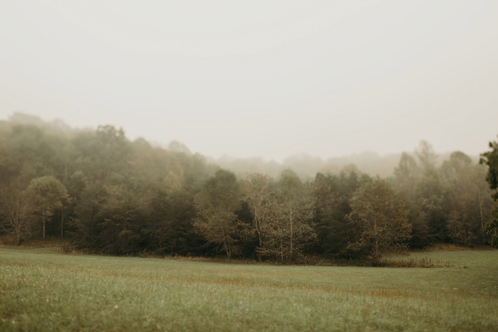 foggy morning in lynchburg virginia