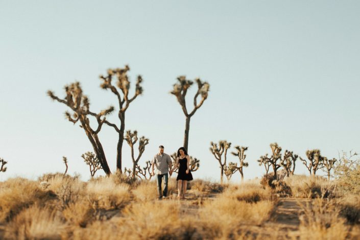 yucca trees in joshua tree national park during the summer
