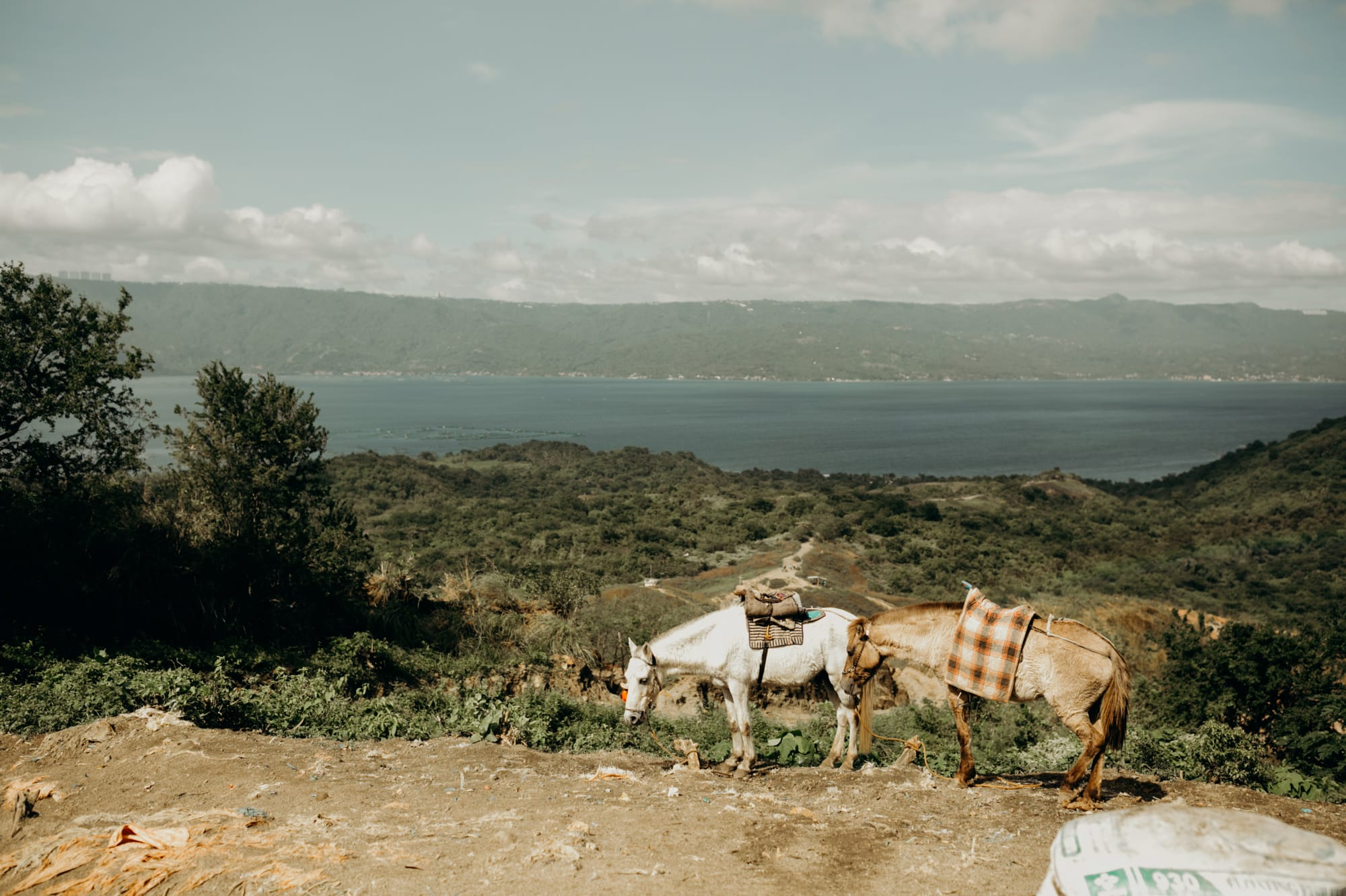 horses on top of taal volcano