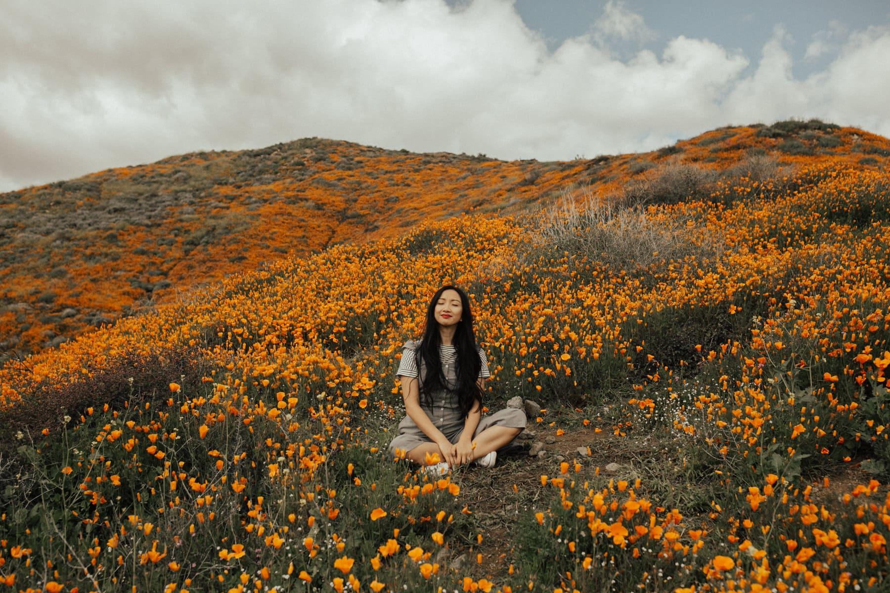 poppy super bloom